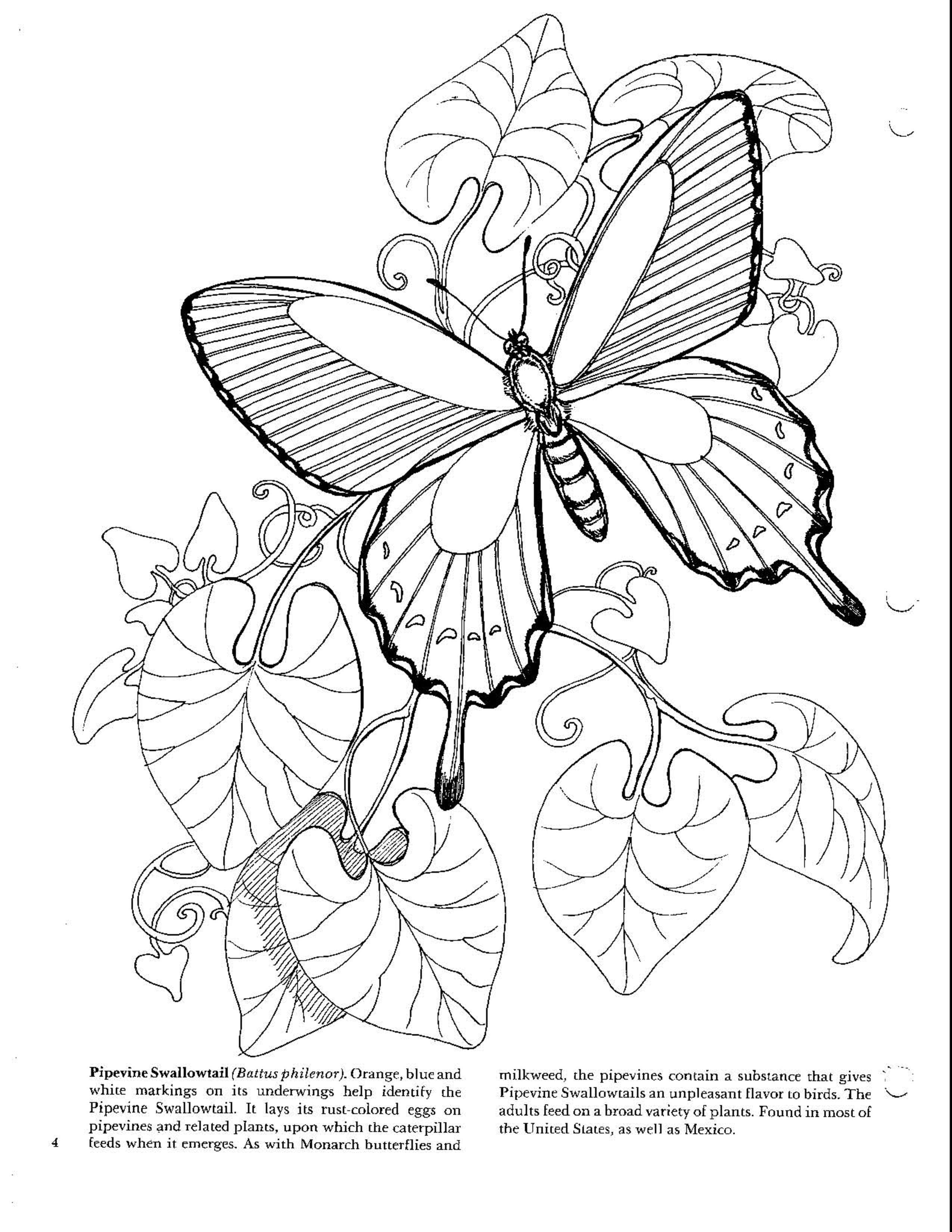 Pin von Escarlet Herrera auf Mariposas   Pinterest   Zentangle ...