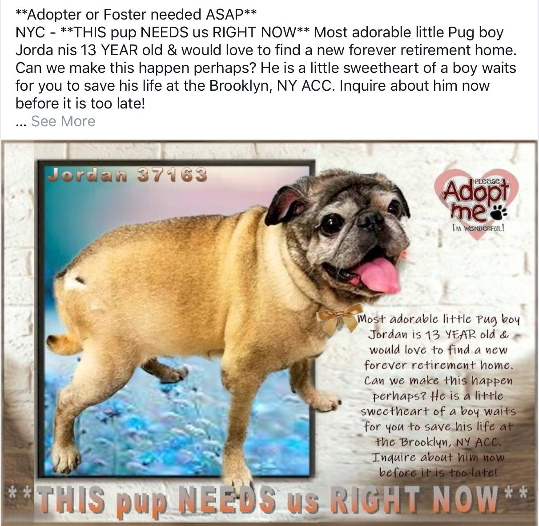 Jordan Needs Help Dogs Nyc 13 Year Olds