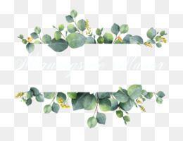 Photo of Eucalyptus PNG – Eucalyptus Watercolor, Watercolor Eucalyptus, Eucalyptus Leaves, Eucalyptus Wreath, Eucalyptus Border, Eucalyptus Tree, Eucalyptus Greenery, Koala Eating Eucalyptus Leaves. – CleanPNG