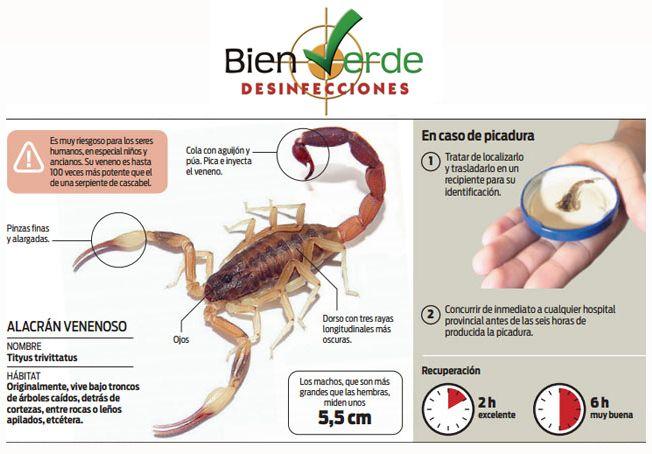 Alacran+venenoso+Bien+Verde.jpg (652×454)