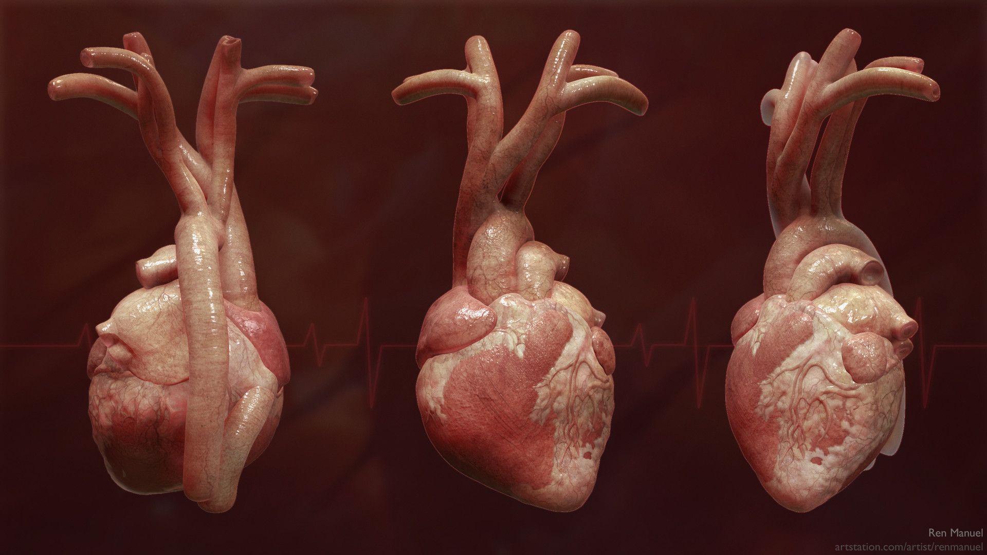 ArtStation - Heart anatomy project, Ren Manuel | Art | Pinterest ...
