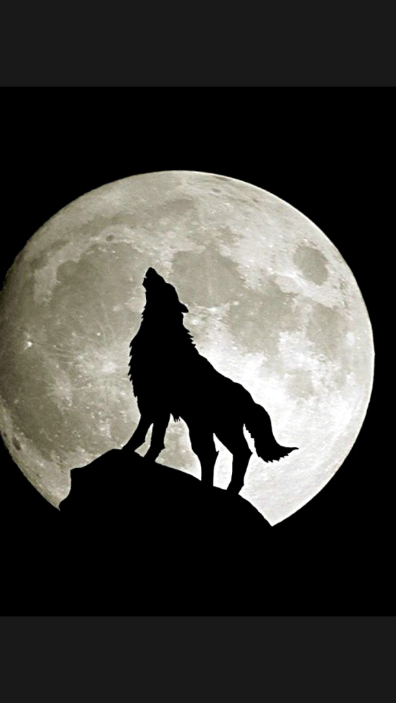 5 Photos From Carousel Wolf Wallpaper Wolf Howling Bark At The Moon