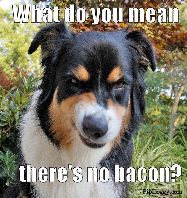 Dog Memes Bacon Meme Dog Daycare Dog Growling Aggressive Dog Breeds