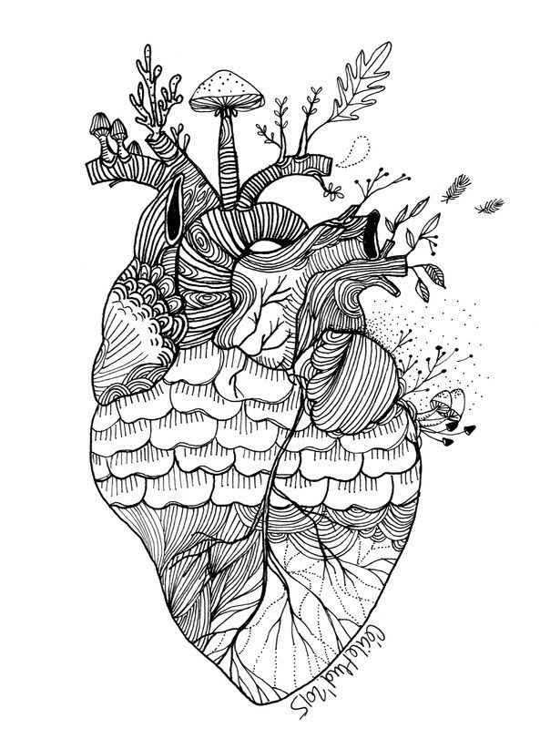 Pin by samantha ogle on zentangle anatomisches herz - Dessin coeur humain ...