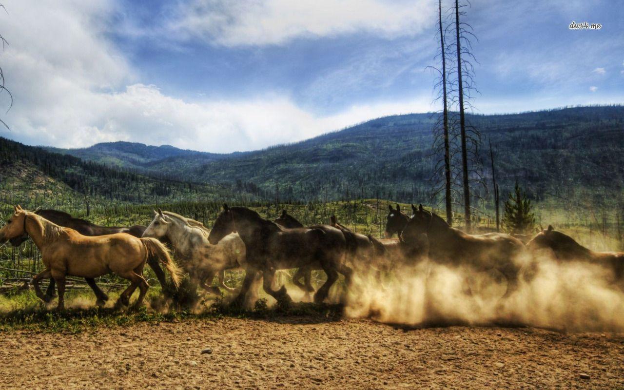 Wild Horse Wallpaper Running Wild Horses Wallpaper Animal