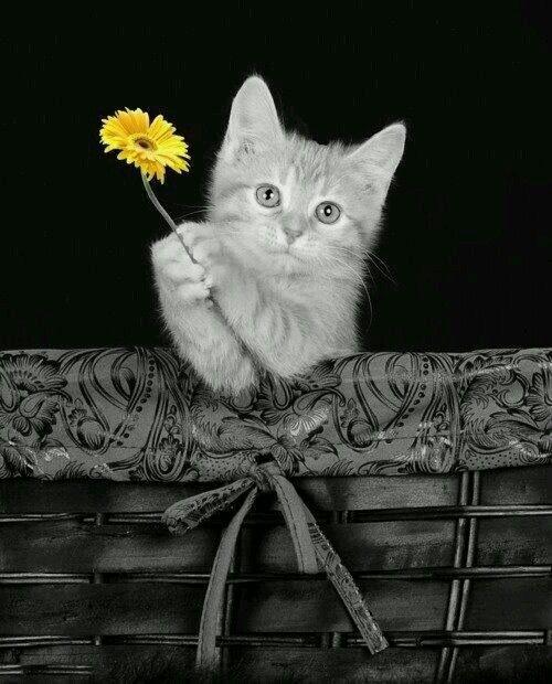 Pin De Jennifer Mills En Cats Gatos Anaranjados Gatos Bonitos Gatitos Adorables