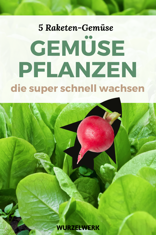 5 Raketen-Gemüse: Pflanzen und ruckzuck ernten!