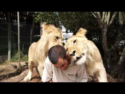 Lion lovin'.