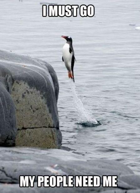 penguinsssssss