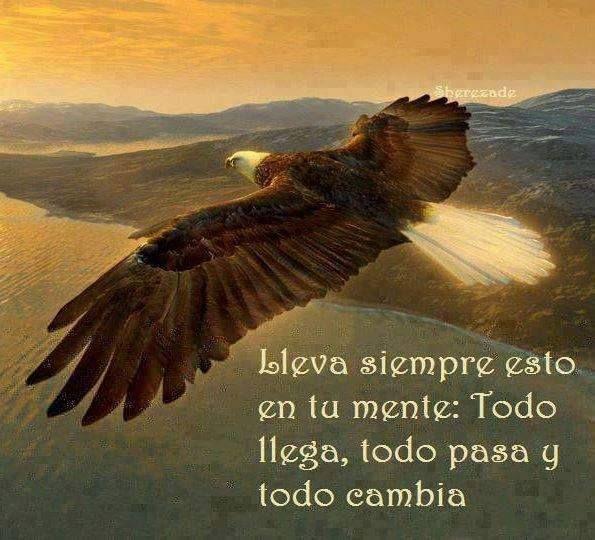 Aguilas fe forex