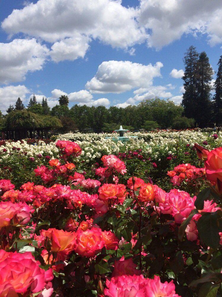 San Jose Municipal Rose Garden Naglee Ave Dana Ave San Jose Ca 95126 Municipal Gardens Beautiful Gardens Manor Garden