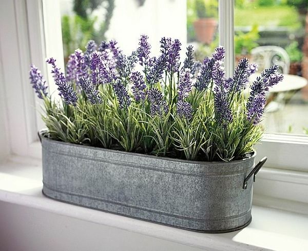 Beautiful Indoor Plants Fulfill The Role Of Decoration
