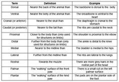 position and directional terms on the anatomy - Google ...