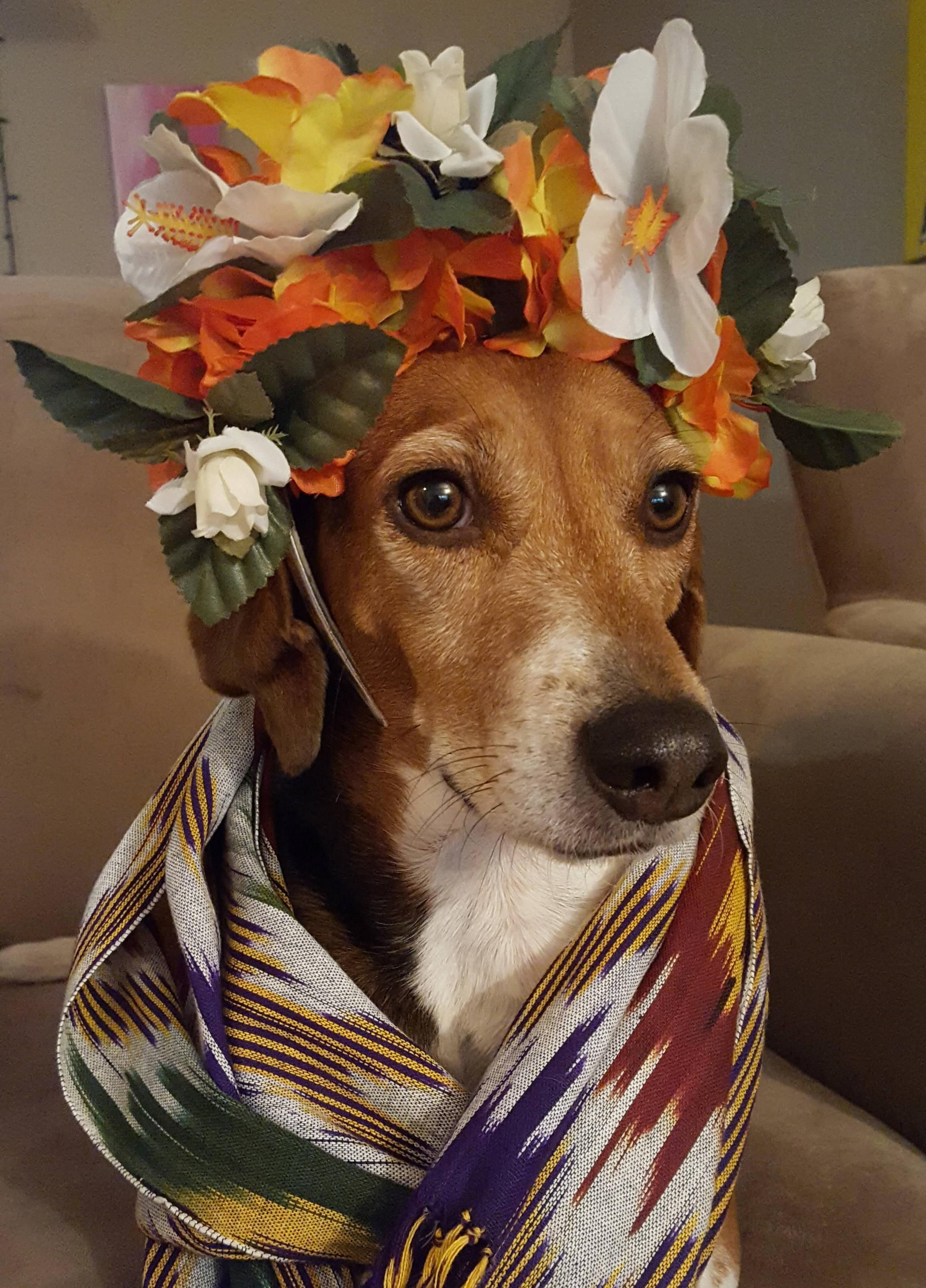 Beagle Chipper Cosplaying As Frida Kahlo