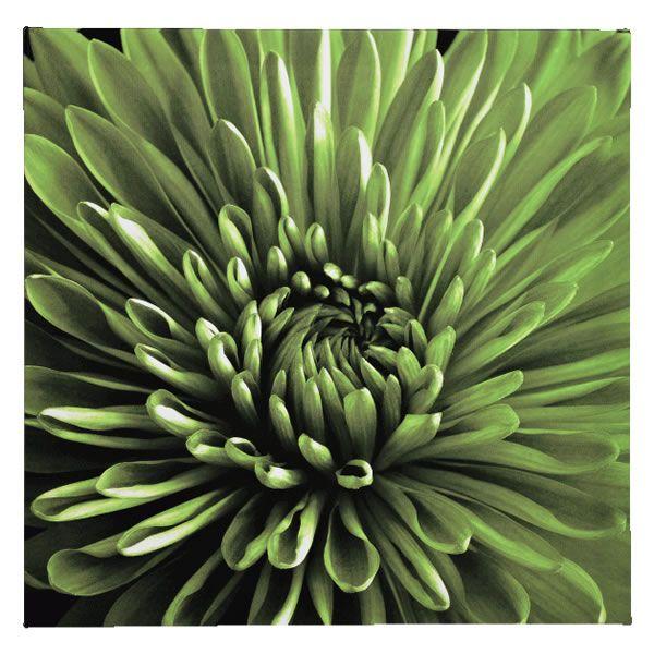Wilko wall art chrysanthemum canvas green 48cmx48cm canvas wilko wall art chrysanthemum canvas green 48cmx48cm canvas pictures pictures from wilkinson plus solutioingenieria Image collections