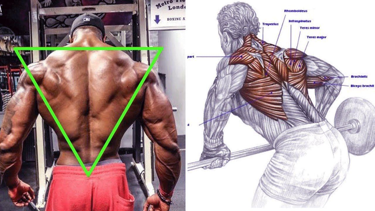New Video By مهووس عضلات كمال الاجسام On Youtube تمرين ظهر تضخيم لتعريض وتضخيم الظهركامل بالصور تمرين ظهر كام Back And Biceps Dumbbell Workout Biceps Workout