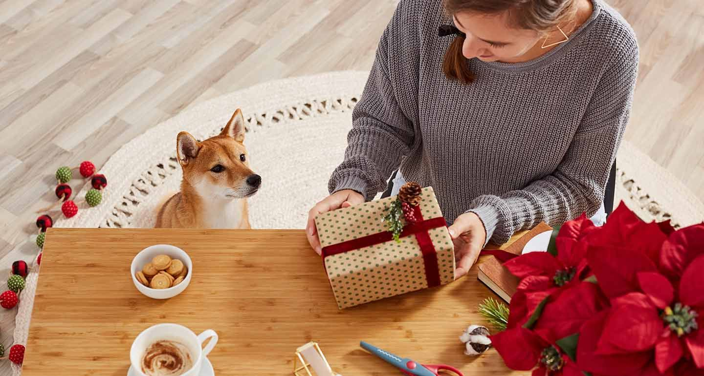 Are Poinsettias Poisonous to Dogs and Cats? A Pet Parent's