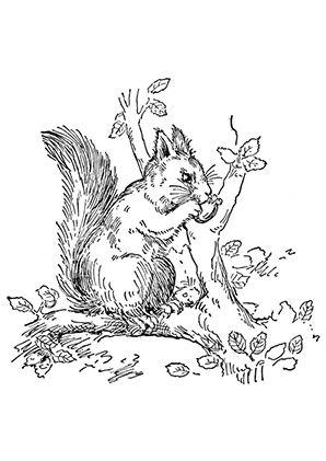 Ausmalbild Eichhörnchen frisst eine Nuss | animal coloring ...