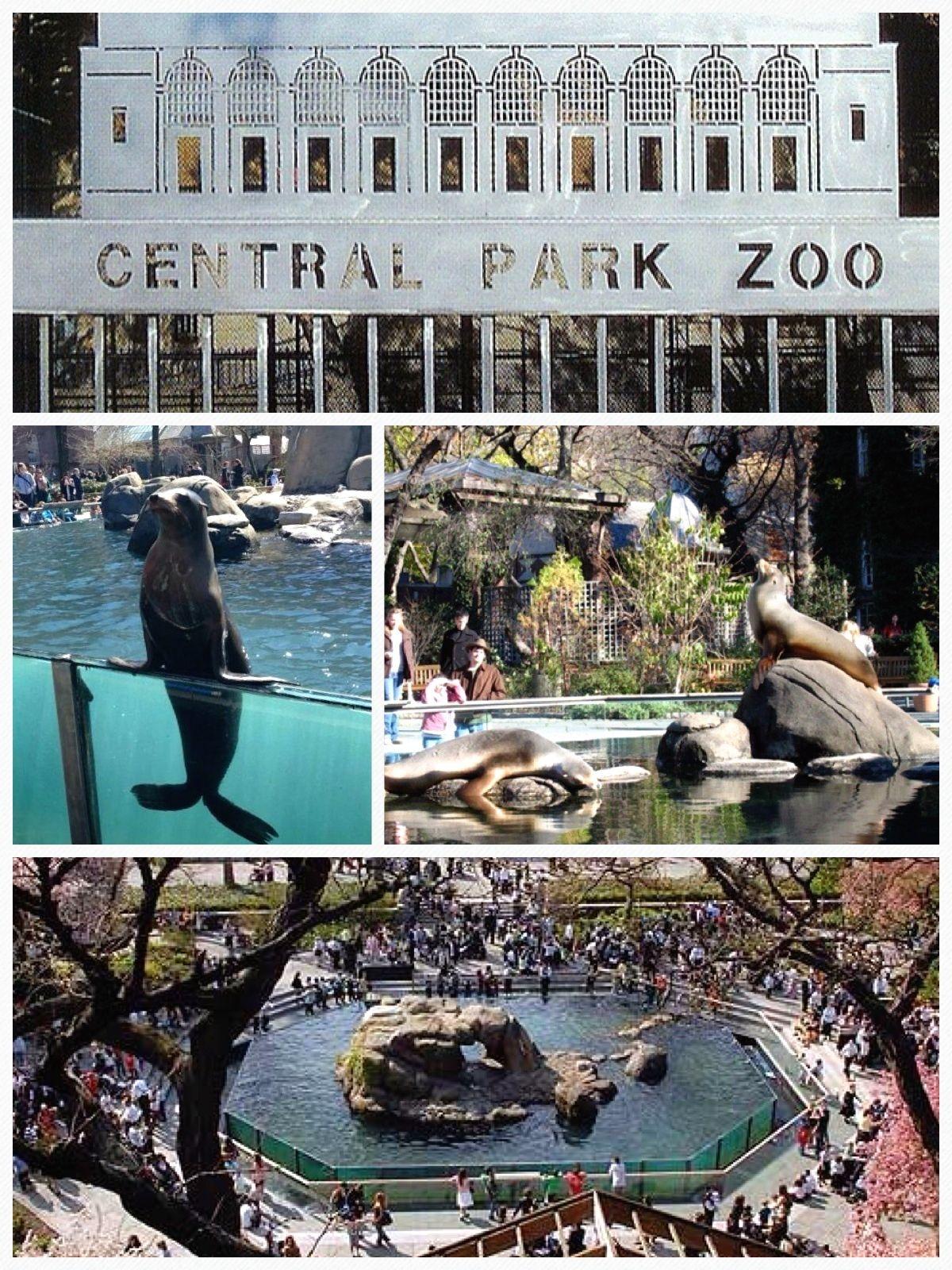 Central Park Zoo Central Park Nyc New York City Central Park