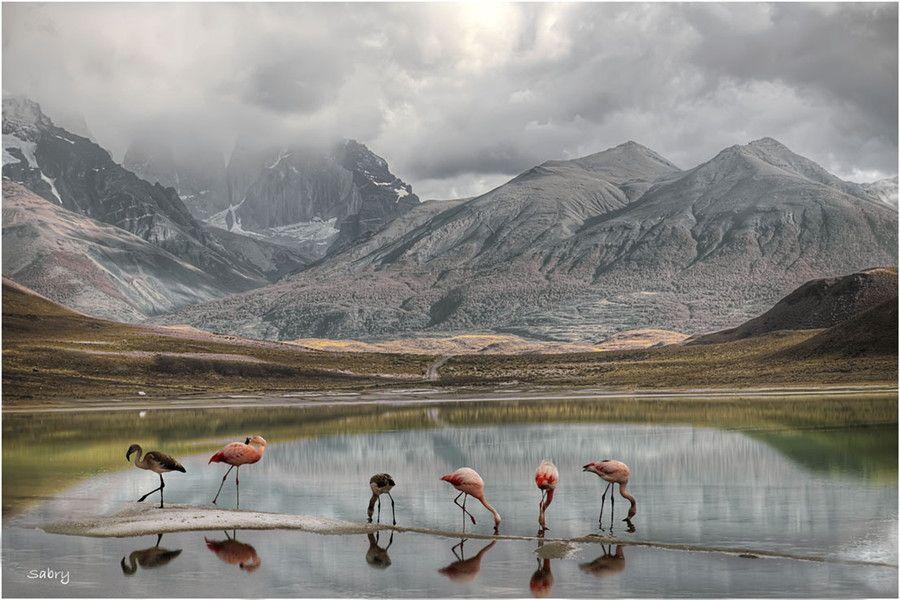 Feeding flamingo by Sabry Mason, via 500px