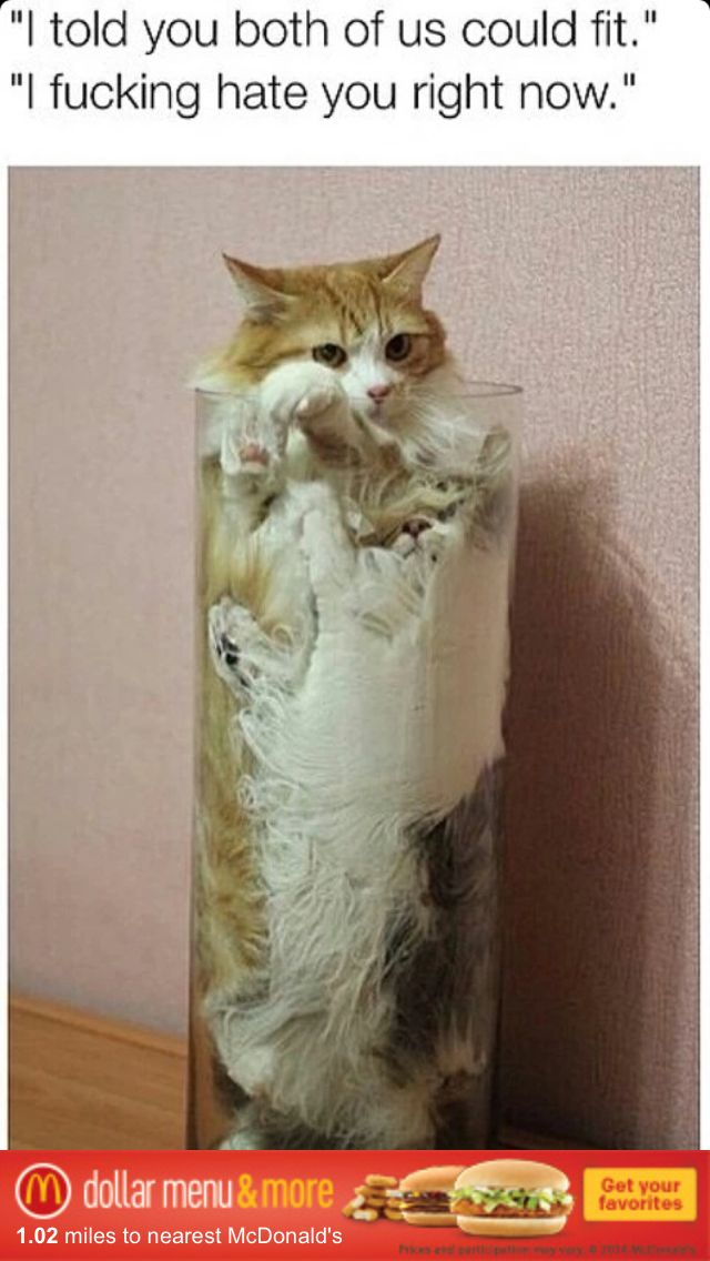 Cats Hate Each Other Stuck In Vase Funny Cat Junk Pinterest Cat