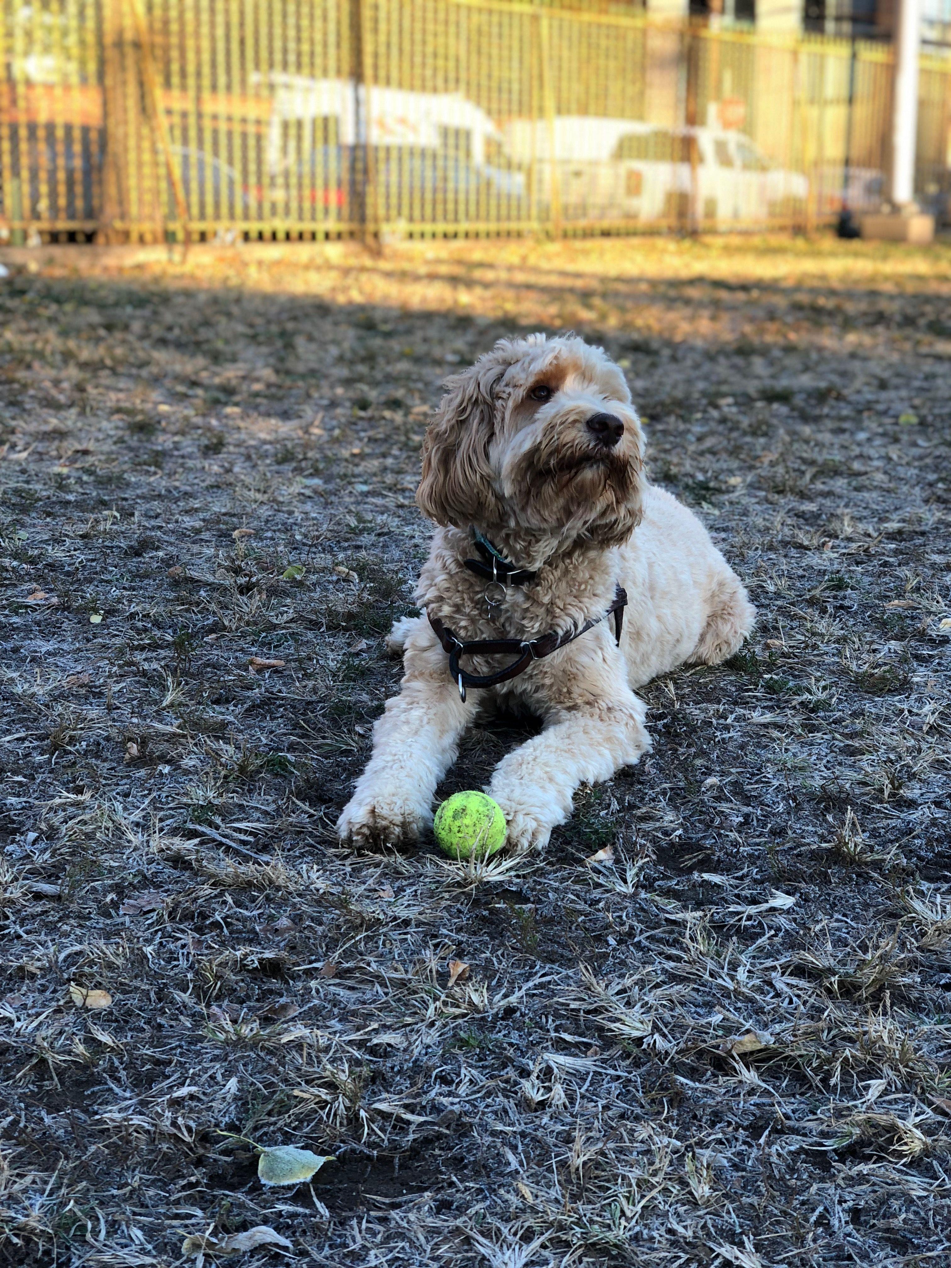 Rope Leash Dog Leash Dog Harness The Perfect Dog