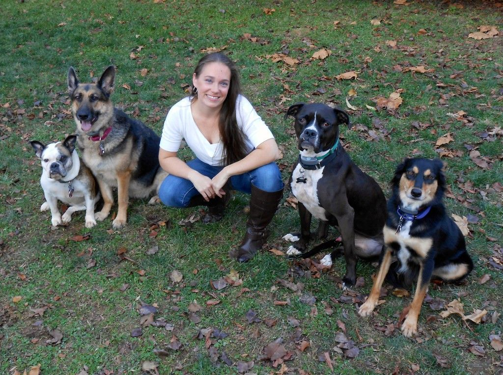Just Another Wordpress Site Dog Dogs Dog Training Tips Dog