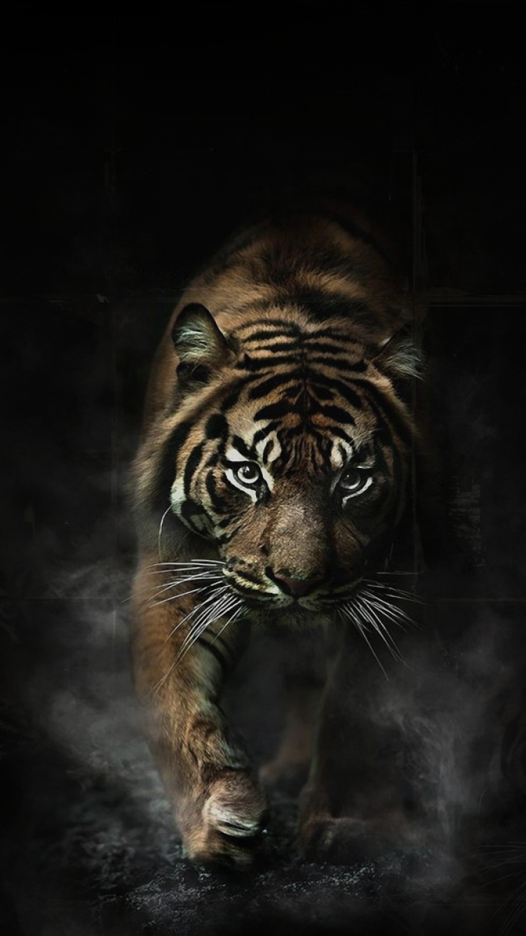 Popular Wallpaper Mobile Tiger - 92d895fac6105fbda7e97cf41aae14bb  Collection_391613.png