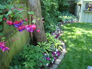 Mark Saidnawey's Gardening Blog: Wait! I shouldn't plant the #1 most popular annual this season?