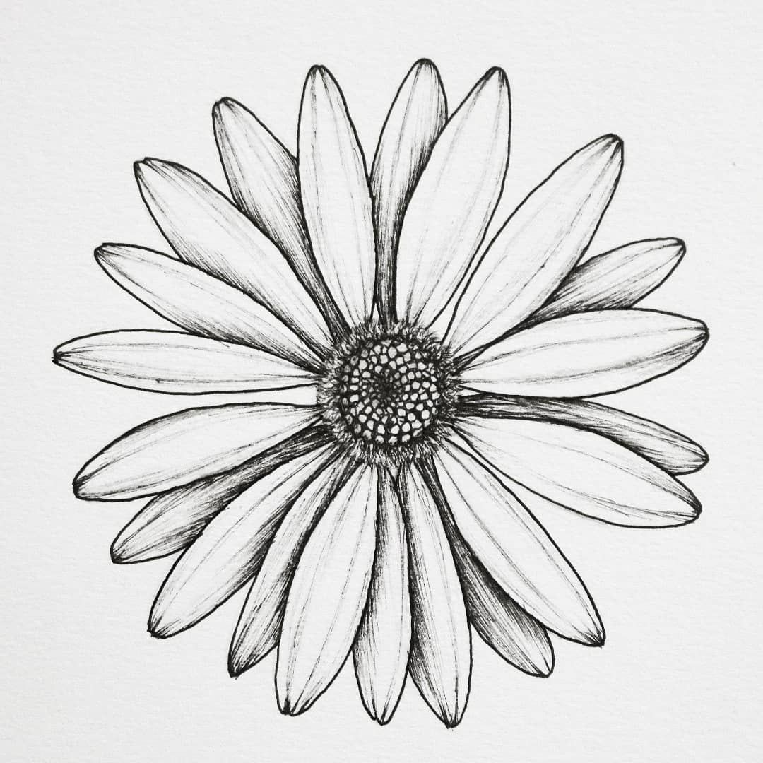 Daisy ✴ . . . #floralsyourway #botanicalartist #botanicallinedrawing #botanicalillustration #plantlady #daisydrawing #daisy #blackworknow… #tattoodrawings