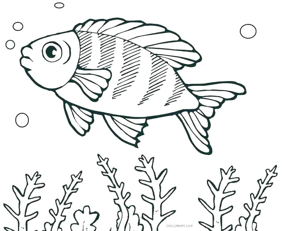 Fish Color Page Fish Coloring Pages For Kids Fishing Coloring Pages