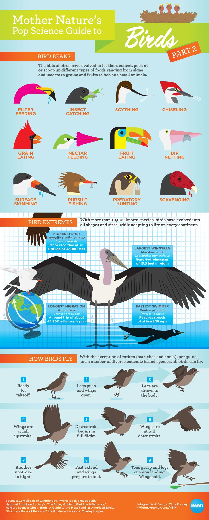 Infographic mother natures pop science guide to birds part 2 awesome poster with tons of text features for reading analysis particularly for unknown words in pooptronica