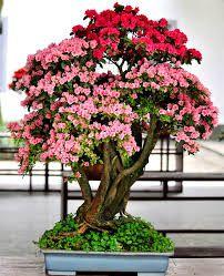 Resultado de imagen para plantas de sombra para interiores con flor