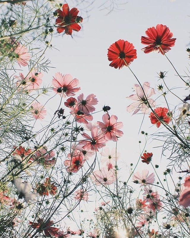 Pretty wild flowers, daisies, poppies  #flowers #inspired #inspirational #flowermarket #summer #flowersbackgroundiphone