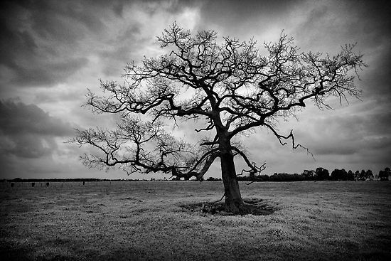 The zone system in black and white photography picturecorrect article by tedric garrison photo curse of the minds eye captured by jim worrall