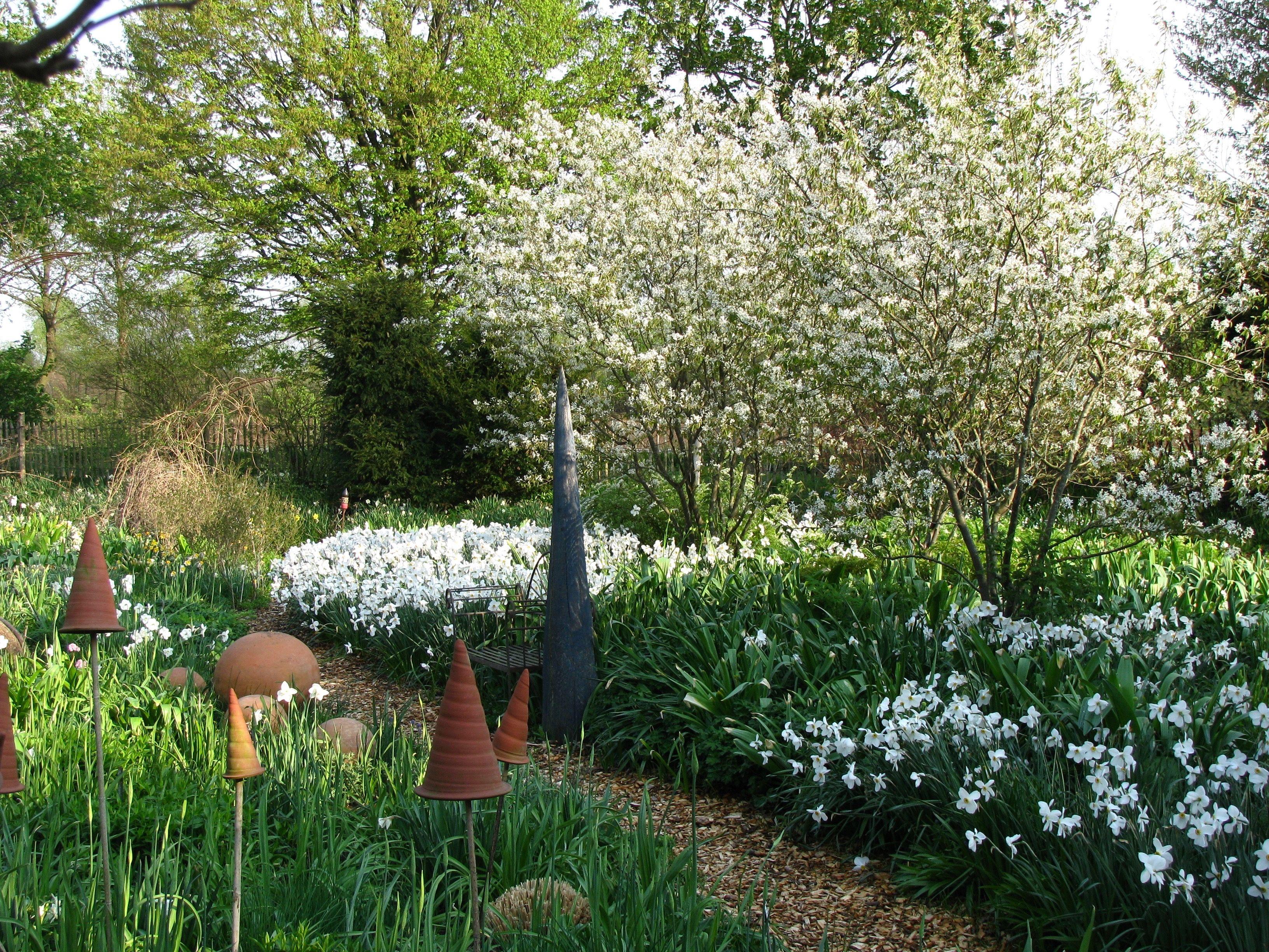 Dichternarzisse Narcissus Poeticus Actaea Stauden Fruhlingsgarten Narzissen
