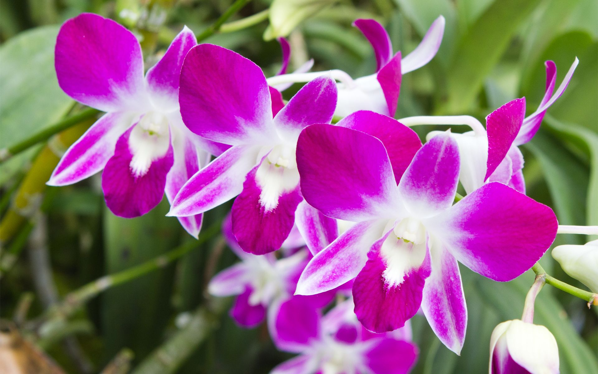 Thailand 2011 – Episode 6 (Orchids, Part Two) « YteneWeb