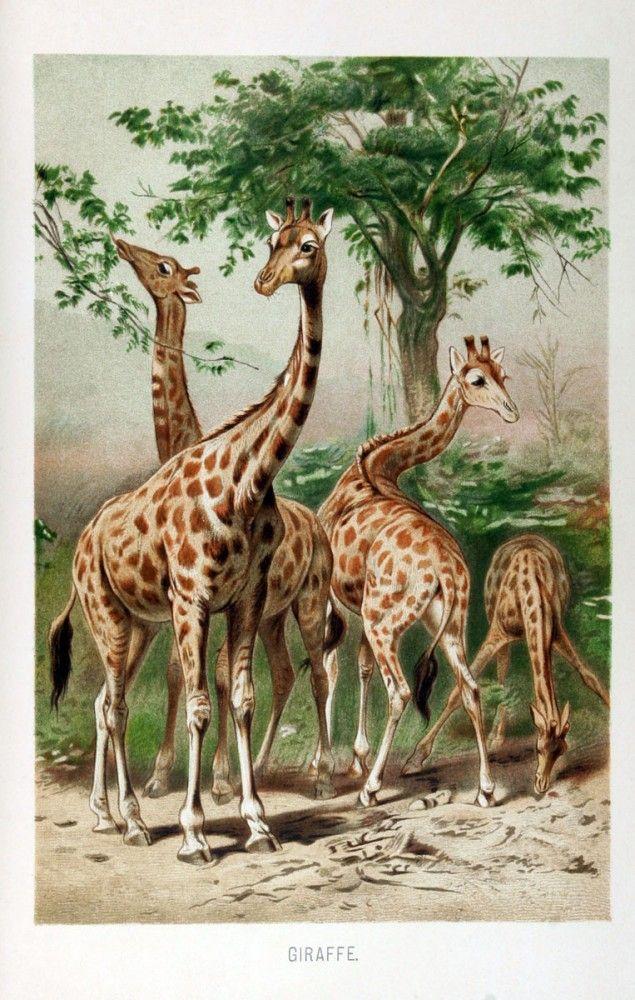 Vintage Animal Illustrations Botanical Trees Vintage