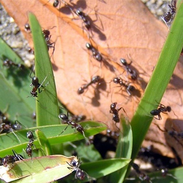 Easy Ways To Naturally Get Rid Of Ants In The Kitchen