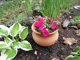 Underneath this pot of impatiens is a plastic container filled with water . Conserve water and keep your flowers well watered. Place a ...
