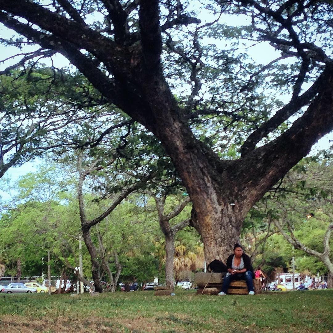 'El que a buen árbol se arrima...' #microvidas #Cali #CaliEsVerde #DeCaliSeHablaBien #PorCaliLoHagoBien #arboles #naturaleza #verde #Colombia #gente