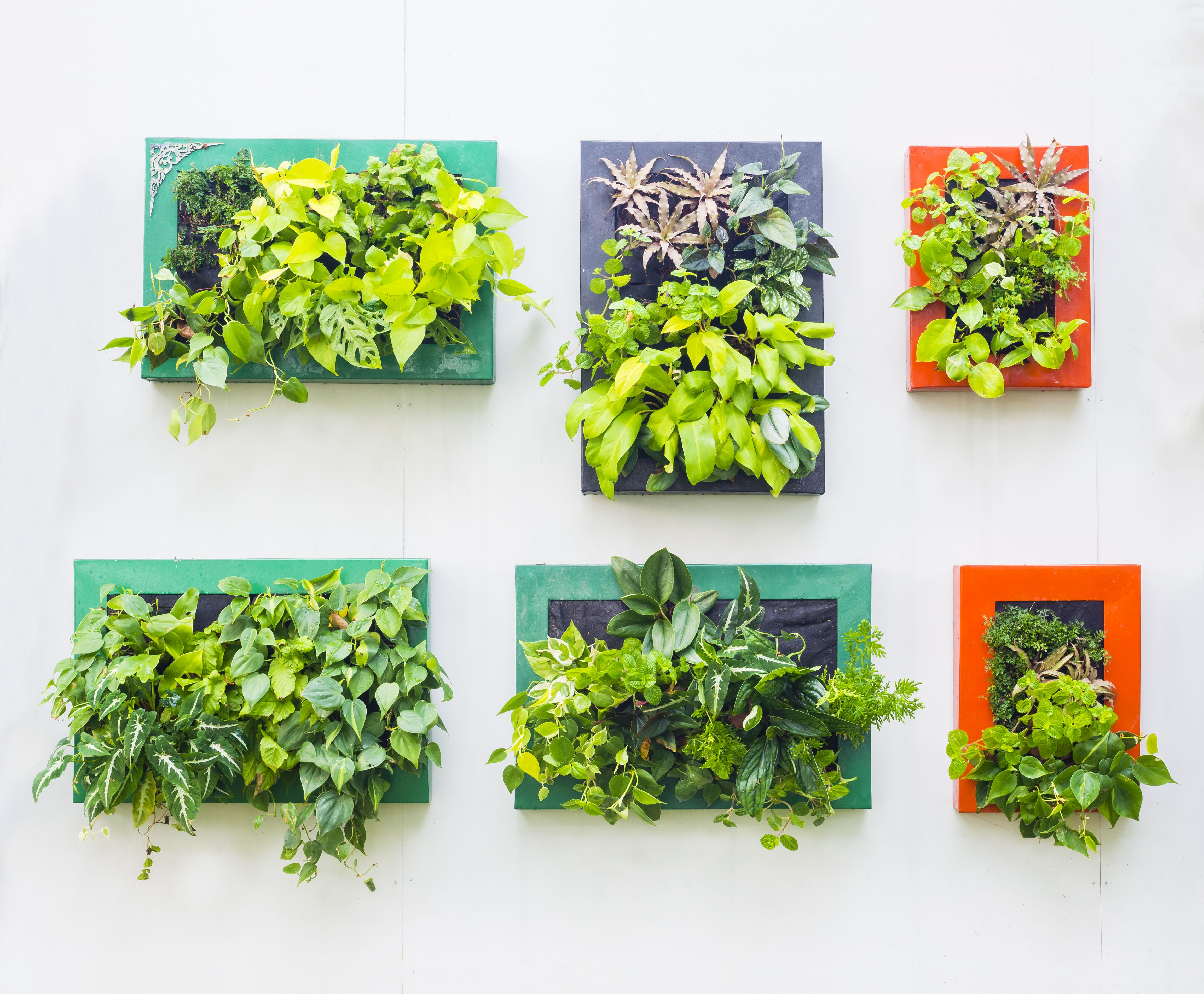 Ideas para decorar tu hogar con plantas jardiner a for Diseno decoracion hogar talagante
