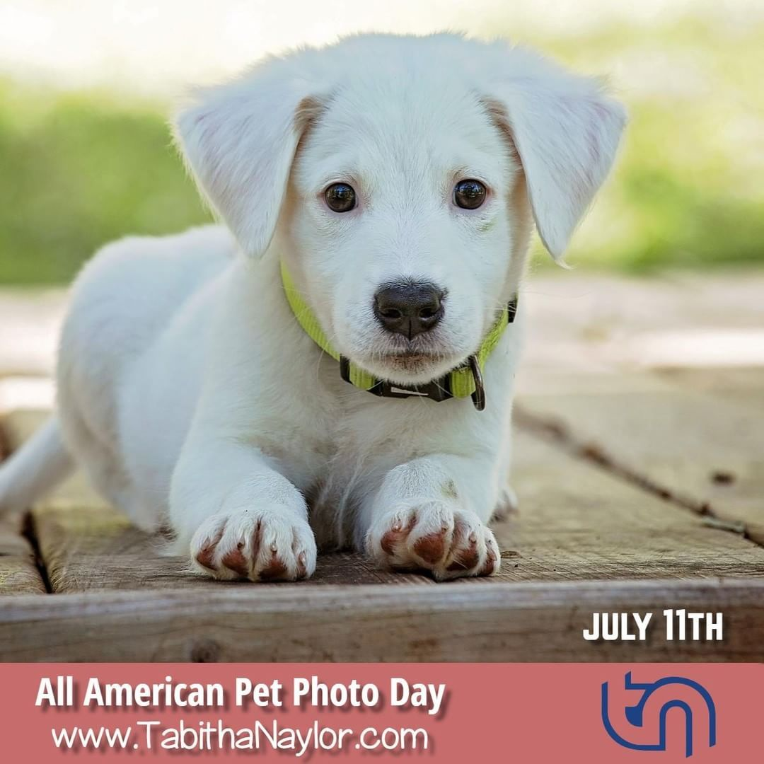 All American Pet Photo Day Is Observed Annually On July 11th