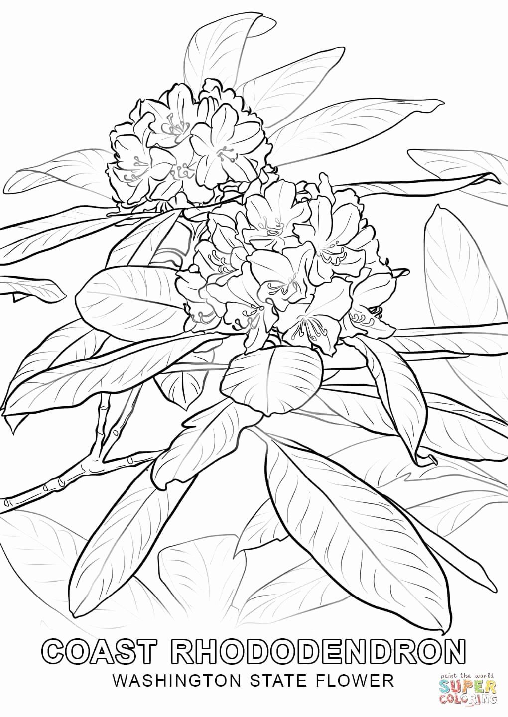 Washington State Flag Coloring Page Inspirational Washington State Flower Coloring Page Flag Coloring Pages Kentucky State Flower Flower Coloring Pages