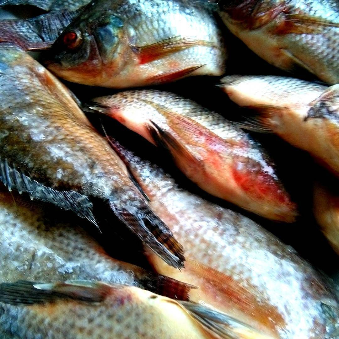 Did someone say fish braai tonight? | Instagram, Instagram