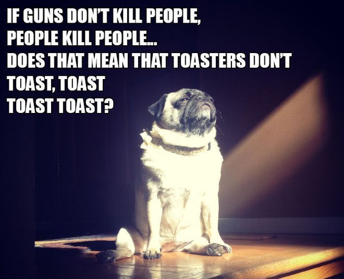Funny animal pics with captions