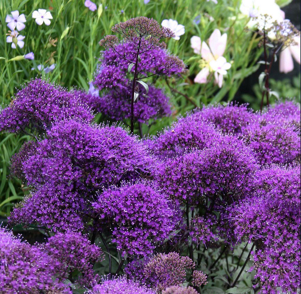 Names Of Purple Flowers For Wedding: Types Of Purple Flowers, Purple Garden