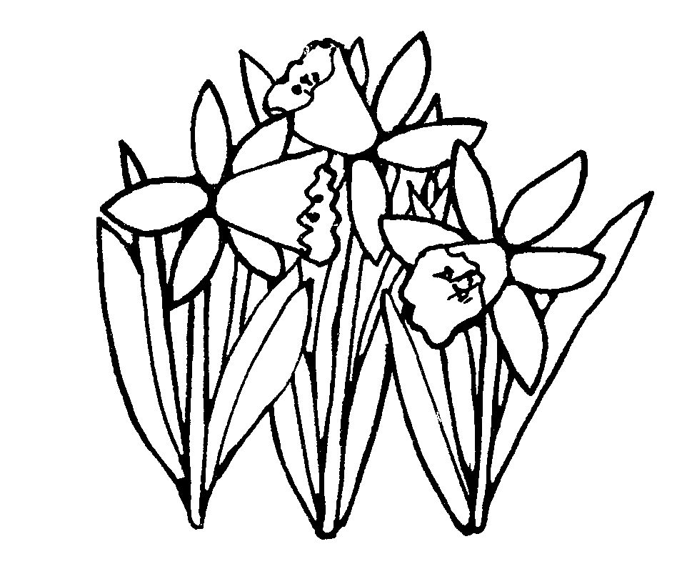 Daffodil Coloring Pages Best Coloring Pages For Kids In 2020 Clipart Black And White Black And White Flowers Clip Art