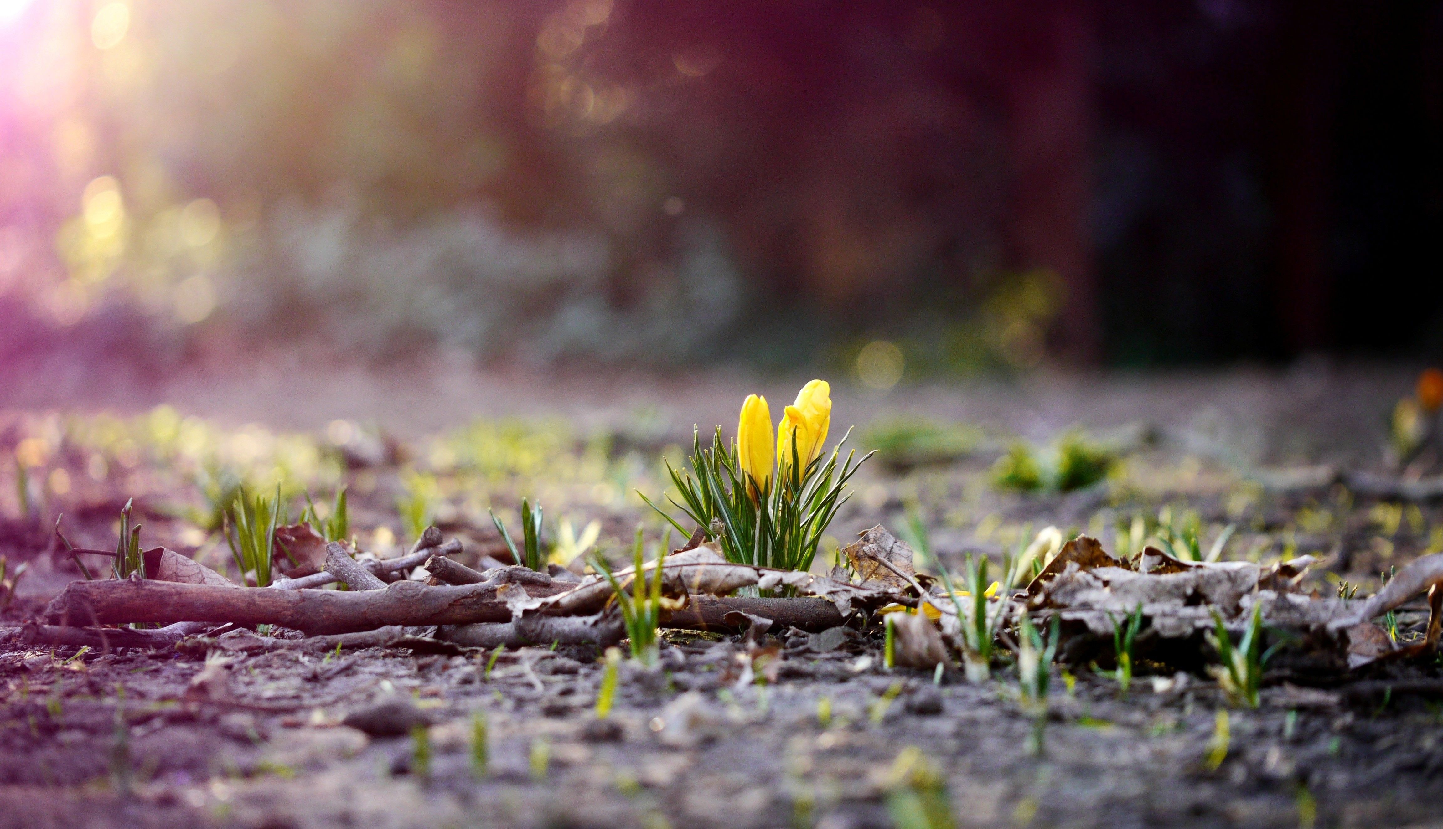 First Flowers Of Spring Photography Pinterest Spring And