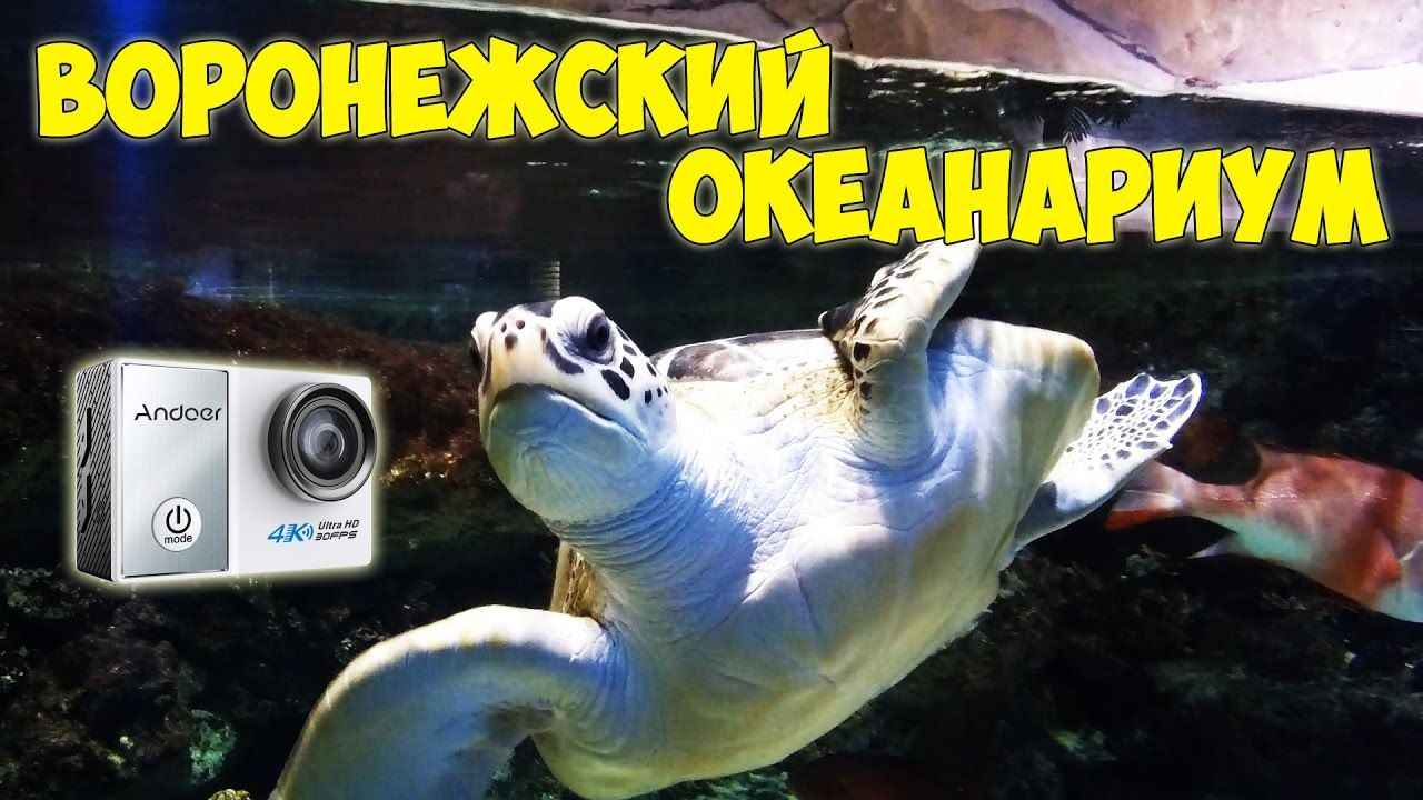 Воронежский океанариум | Тест экшн камеры Andoer C5 Pro